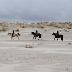 paardjesaanzee